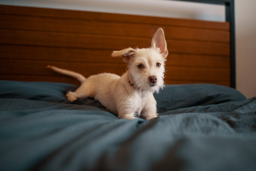 Buying a Bed for Your Dogs Online – Picking Only the Most Highly Recommended Ones