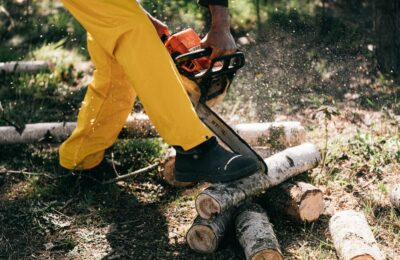 Taking a Closer Look at Trustworthy Tree Care Services – Things You Should Know